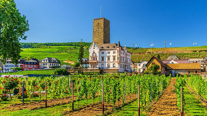 Vinranker i Rüdesheim like ved Rhinen.